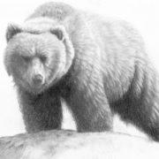 Carnivores of British Columbia
