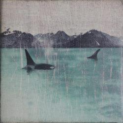 Orcas++(1)