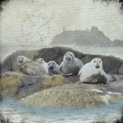 Seals+