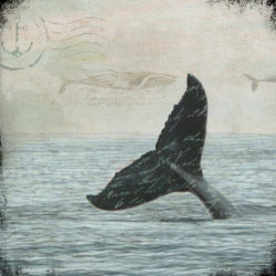 Whale+Tail+